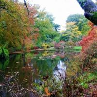 Autumn in Exbury