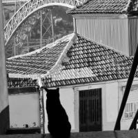 Ponte Luizi