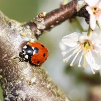 Ladybird at Testwood Lakes